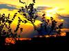 New York Sunset (dimaruss34) Tags: newyork brooklyn dmitriyfomenko sky clouds sunset sunrays tree
