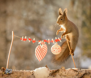 red squirrel is standing on a wash line with hearts