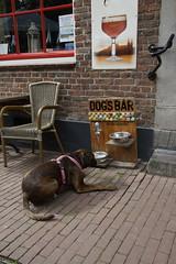 Pinksterwandeling Mechelen Zuid-Limburg 21-05-2018 (marcelwijers) Tags: pinksterwandeling mechelen zuidlimburg 21052018 wandeltocht zuid limburg wandern wandelen walk march marche wanderung nederland niederlande netherlands paysbas boxer marly bij de dogs bar