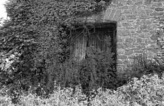 Bourton (leavesandpuddles) Tags: derelict decaying decay dereliction derelictbarn derelictfarm abandoned ruraldecay rural ruined ruin ruinous bourton totnes murdershack ivy ivyclad devon southhams monochrome blancetnoir blancoynegro biancoenero blackandwhite bw schwarzundweiss