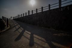 Runner. (Yasuyuki Oomagari) Tags: light shadow slope runner sun riverside bank jog jogger sports running nikon d850 zeiss distagont2821 japan fukuoka kurume kyushu street 日本 九州 福岡 ジョギング ランニング ランナー