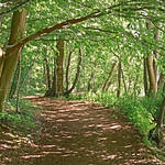 Forest trail in early summer thumbnail