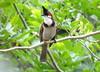 IMG_8285 (mohandep) Tags: bangalore families anjana derek birding food