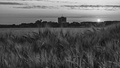Sonnenaufgang über dem Kornfeld (robertderyck) Tags: blumen felder hummel kornblume landscape landschaft mohnblume roggen sonnenaufgang weizen