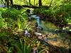 woodland walks (Defabled) Tags: gorsygedol woodland paths