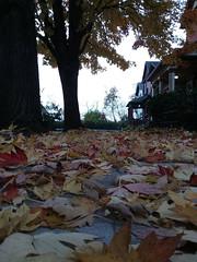 11-07-17 Dayton 05 leaves, fall color (Chicagoan in Ohio) Tags: dayton clouds sun sunhalo leaves fallcolor