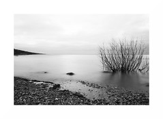 Ilmen Lake 2 (GlebLv) Tags: sony a6000 sigma19f28 ilmen lake landscape bw nb monochrome nature