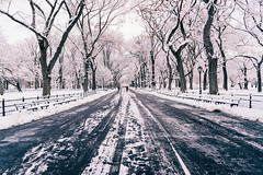 Work hard, push your limits (RomanK Photography) Tags: centralpark landscape manhattan nyc newyorkcity morning road snow snowstorm sonyalpha trees winter
