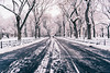 Work hard, push your limits (RomanK Photography) Tags: centralpark landscape manhattan nyc newyorkcity morning road snow snowstorm sonyalpha trees winter