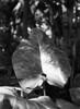 Botanisk Have (holtelars) Tags: pentax 645 pentax645 645n 6x45 smcpentaxa 120mm f40 macro 120 film 120film foma fomapan fomapan100 fomapan100professional 100iso mediumformat analog analogue blackandwhite classicblackwhite bw monochrome filmforever ishootfilm filmphotography xtol homeprocessing larsholte denmark danmark flower closeup botanicalgarden botaniskhave copenhagen københavn