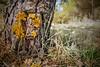Amarillo liquen. (marysaesteban) Tags: 2017 españa march marzo sanmigueldearroyo spain valladolid primavera spring lichen liquen
