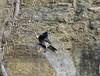 20180407-0I7A9252 (siddharthx) Tags: achampet bird birdwatching birdsofindia birdsoftelangana canon canon7dmkii closerange dawn dawnsunriseumamaheshwaram ef100400f4556isii goldenhour portraiture sunrise telangana umamaheshwaramtemple india in redventedbulbul bulbul