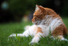 Cat profile (Engin Süzen) Tags: cat catportait cats felidae olympus em1markii omd portait pet olympus75mmf18 olympusomdem1markii kitten pussy pussycat depthoffield
