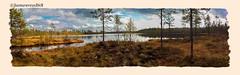 Le pays aux mille lacs - Finlande - Koivujärvi (jamesreed68) Tags: kodak easyshare c183 finlande lac finland lake eau water taïga forêt nature paysage arbres koivujärvi