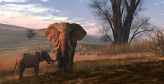 Watchful (kalia harva) Tags: secondlife elephant roymildor devin devin1 devin2