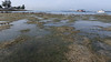 Seagrasses at Pulau Semakau (South) (wildsingapore) Tags: pulau semakau south seagrasses singapore marine coastal intertidal shore seashore marinelife nature wildlife underwater wildsingapore