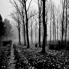 Niebla negra (una cierta mirada) Tags: fog foggy outdoors forest woods trees bnw blackandwhite nature dark black