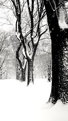 Hello Spring ️️️️️️ (Maya K. Photography) Tags: firstspringday snowyday snowpicture snow spring trees naturephoto naturephotography nature centralpark walk newyorkphotography newyorkcity newyork newyorkphoto ny nyc america unitedstatesofamerica us usa bw bwphoto bwphotography blackandwhitephotography blackandwhitephoto blackandwhite monochrome mayak mayakphotography mobilephoto motorolaxt1575