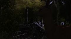 Sable (Benny_Green) Tags: secondlife prey hunter predator keystone species sl twi timber wilds feral reflect privilege netherwood