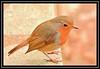 """Friendly Derwentwater Robin..."" (NikonShutterBug1) Tags: nikond7100 tamron18400mm birds ornithology wildlife nature spe smartphotoeditor bokeh robin derwentwater keswick wingwednesday"