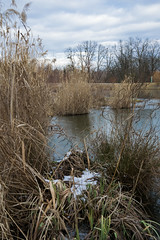 180120_Auwiesen_055 (Rainer Spath) Tags: österreich austria autriche steiermark styria graz liebenau thondorf auwiesen mur winter eis ice