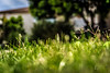 Hope (Images by April) Tags: green grass succulent spring tamron1750mmf28