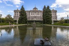 Palacio Real de Madrid (kike.matas) Tags: canon canoneos6d canonef1635f28liiusm kikematas palaciorealdemadrid madrid palacio jardines agua reflejos patos arboles nubes paisaje lightroom6