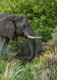 ELEPHANTS DIET: Yummy….