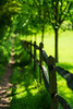Chilworth Manor, Surrey (tonybill) Tags: chilworth may sonya7riii sonyfe85mmf14gm sunshine surrey