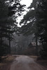 Silent forest (izzistudio) Tags: buy photography print etsy shop izzistudio forest wood tree trees pine baltic nordic fog foggy mist misty road lonely silent quiet dark april spring morning nature landscape house neutral