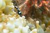 20170715-DSC_9506.jpg (d3_plus) Tags: 南伊豆 southizu drive fish marinesports apnea izu sea j4 underwater nikon1 景色 魚 水中 watersports wpn3 185mm closeuplens マリンスポーツ japan 風景 ニコン 50mmf18 50mm ニコン1 nikonwpn3 ウォータープルーフケース 素潜り クローズアップレンズ skindiving nikkor nikon スキンダイビング nikon1j4 inonucl165m67 sky 海 snorkeling ucl165m67 diving 1nikkor185mmf18 scenery 息こらえ潜水 ズーム port 185mmf18 空 日本 inon waterproofcase シュノーケリング zoomlense