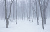 2529 (Keiichi T) Tags: 木 canon tree eos 森 日本 snow forest 6d 霧 雪 fog japan