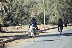 Covering Her Face Partially (meg21210) Tags: woman street road morocco moroccan desert streetscene marketday people moroccans donkey sahara coveringherface