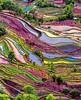 🌍 Yuanyang rice terraces, Yunnan, China (travelingpage) Tags: travel traveling traveler destinations journey trip vacation places explore explorer adventure adventurer