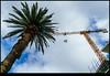 180218-6284-XM1.JPG (hopeless128) Tags: australia sky palmtree sydney 2018 crane cronulla newsouthwales au