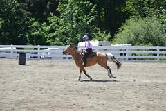 DSC_4104 (Primespot Photography) Tags: show horse horseshow game games horsegames barrels barrells barrals barralls pony