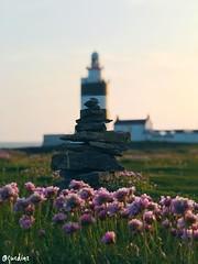 Enjoying The Emerald Isle. 🇮🇪 (gusdiaz) Tags: vacation greens roadtrip iphone7plus iphone7 iphone wildflowers rocks beach isle emerald ocean hook bokeh lighthouse ireland