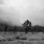 the joshua tree thumbnail