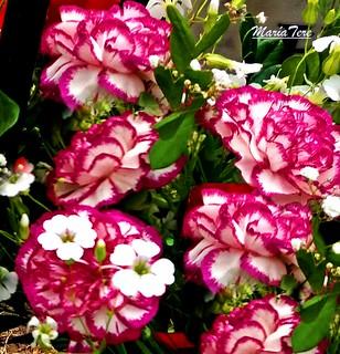 Flores para La Virgen...