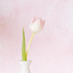 Fijne paasdagen (Schotje) Tags: tulp roos groen achtergrond zacht wit stilleven macro bloem vaas