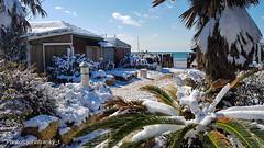 02-26-2018 Snowfall in Rome Italy (johnfranky_t) Tags: mare tirreno johnfranky t lido di ostia neve palme cespugli