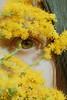 Varas doradas (barbarabezina) Tags: selfportrait canon eye yellow flowers macro