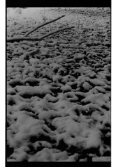 P60-2018-023 (lianefinch) Tags: argentique argentic analogique monochrome blackandwhite blackwhite bw noirblanc noiretblanc nb nature analog jardin garden hiver winter snow neige frozen gelé minimalisme minimalism