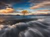 The lost cousin (Dylan Toh) Tags: laketaupo nisifilters aotearoa australianlandscapephotographer dylantoh everlooklandscapephotography lake longexposure newzealand sunset tree waves