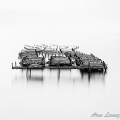 IMG_7059.jpg (arnolamez) Tags: seascape poselongue longexposure nisi cancale parcahuitre blackandwhite noiretblanc minimaliste minimalist