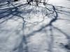 Square of Arts (peterphotographic) Tags: olympus em5mk2 microfourthirds ©peterhall stpetersburg saintpetersburg russia санктпетербу́рг росси́я p3210307edwm snow cold winter ice freeze frozen shadow tree branch pattern abstract squareofarts