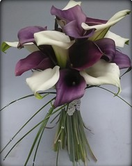 Purple and White Callas (Flowers by Moonstones - Fareham Florist) Tags: wedding weddingflowers bridalflowers bridalbouquet weddingbouquet flowersbymoonstones flowers florist moonstones farehamflorist fareham purple white callalily calla lilies