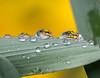Repeating. (Omygodtom) Tags: refraction reflection flickr flower zapper existinglight macrodreams natural macro bokeh nikon70300mmvrlens d7100 dof