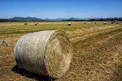 Rural Harvesting (Geoffsnaps) Tags: rural harvesting farm kentslagoon queensland hay bales grass nikond810 nikon d810 fx nikonnikkor28mmf18gafs nikkor 28mm f18g f18 18g afs 18 g explored