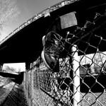 Shoe on Fence - Viaduc Van Horne thumbnail